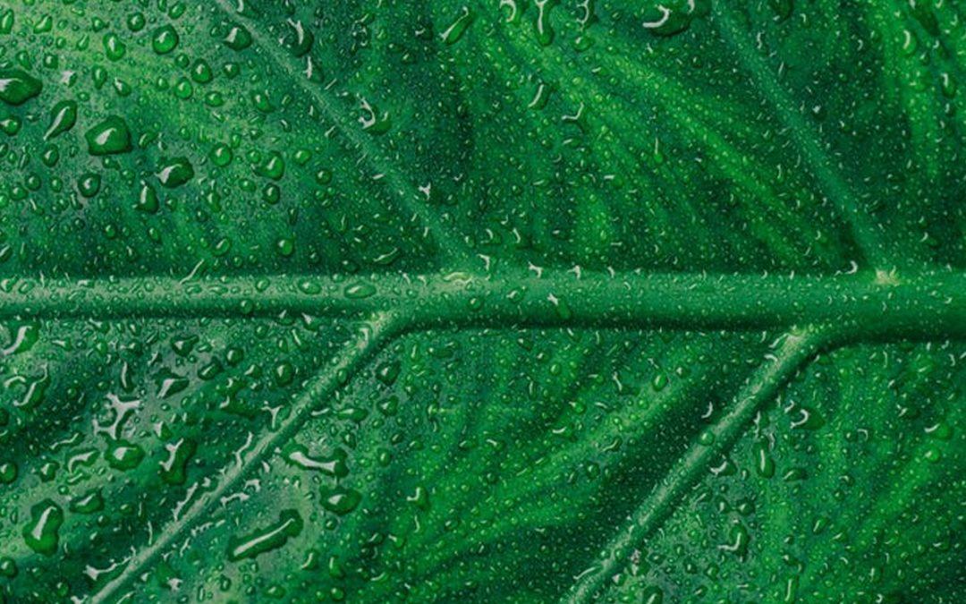 Análisis de riesgo ambiental en el marco de la ley de responsabilidad ambiental