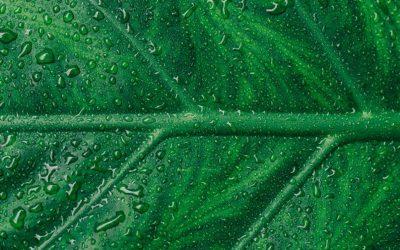 Anàlisi de risc ambiental en el marc de la llei de responsabilitat ambiental